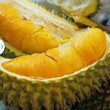 durian8818