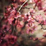 springdayph