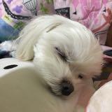 yumi_bobo