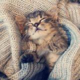 blue.kitten