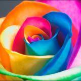 rainbows25