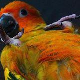 fluffaybird