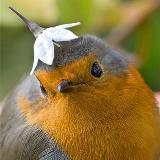 jammingbird777