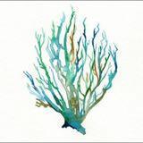 oceanloverc