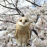 owlowlshop