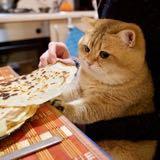 kittycatcloset