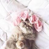 meowwmunchin__