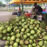 jago_coconut