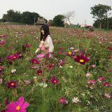 yucheng730