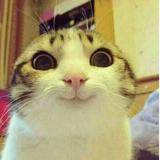 meow_nib