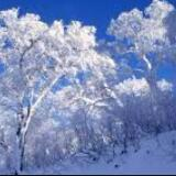 snowonice