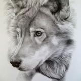 lonewolf.