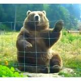 bearcave
