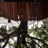 treeofgoodies