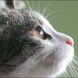 chiheartcat