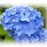 blueny