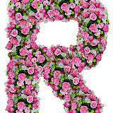 rose_baby168