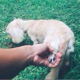 love__dachshund