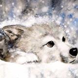 _wolfz