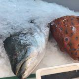 fishmangoer