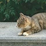 meow_neko_meow