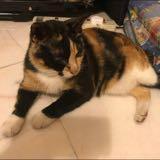 kitty.meowmeow