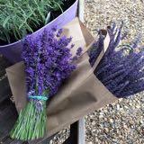 purplelavender2