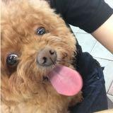 dingdong__0922