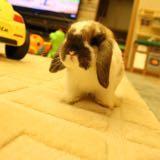 evil_bunny
