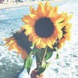 sunflowerems
