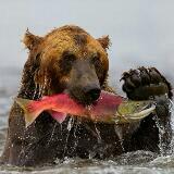 hungrybeast