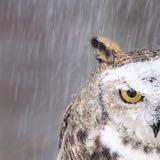 owlbeebs