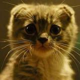 catladynbabies