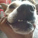 wei.dog