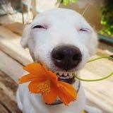 happykate