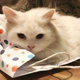 shopaholic.kitty