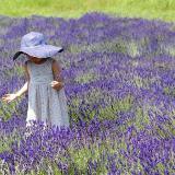 lavender.lovednnew
