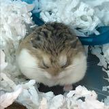 hamsterstore