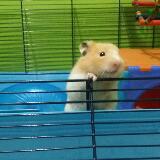 hamsterlover4