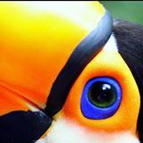 birdhut