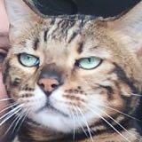 catnip_51