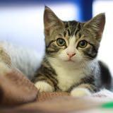 lucas_cat