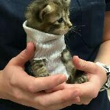 whodatcat