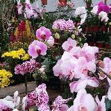 flora968