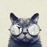 coolcatz