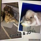 bunnyworks