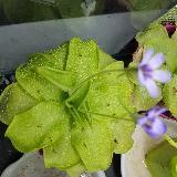 carnivorousplantsforsale