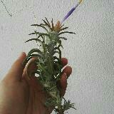 airplant2328