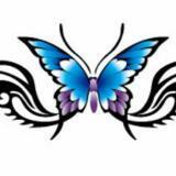 butterflykitty