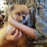 hk_shopholic